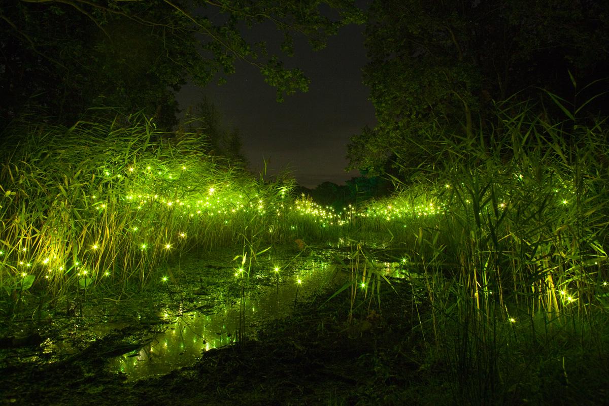 изображение светлячки фото картинки гостинице щара